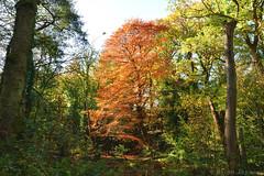 "Autumn Tree <a style=""margin-left:10px; font-size:0.8em;"" href=""http://www.flickr.com/photos/43603376@N05/50627647023/"" target=""_blank"">@flickr</a>"