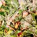 School Lunch Salad