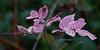 Pink Leaves 429