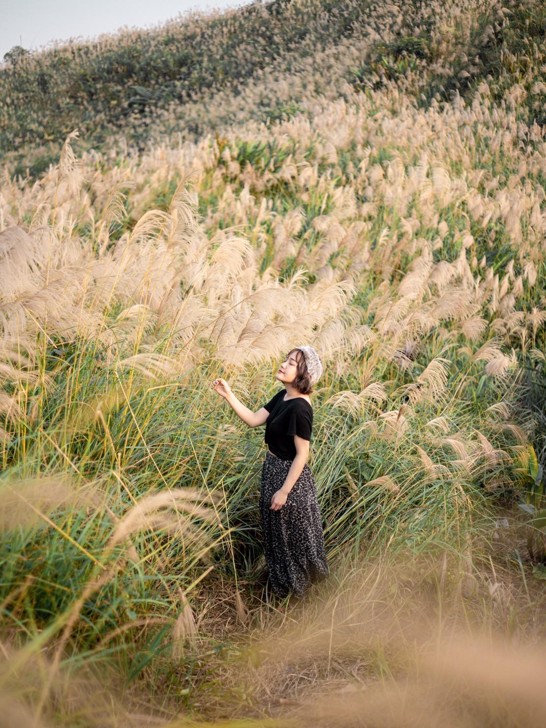 芒草季|新北樹林三角埔頂山交通、花期、拍照攻略|滿山遍野銀白芒草花海