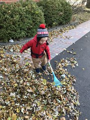 "Luc Rakes Leaves • <a style=""font-size:0.8em;"" href=""http://www.flickr.com/photos/109120354@N07/50633875578/"" target=""_blank"">View on Flickr</a>"