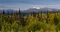 Watchable Nature Amongst the Mountains (Denali State and National Parks)