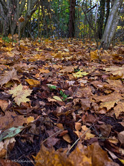 Photo of 2020 11 14 - woodland carpet