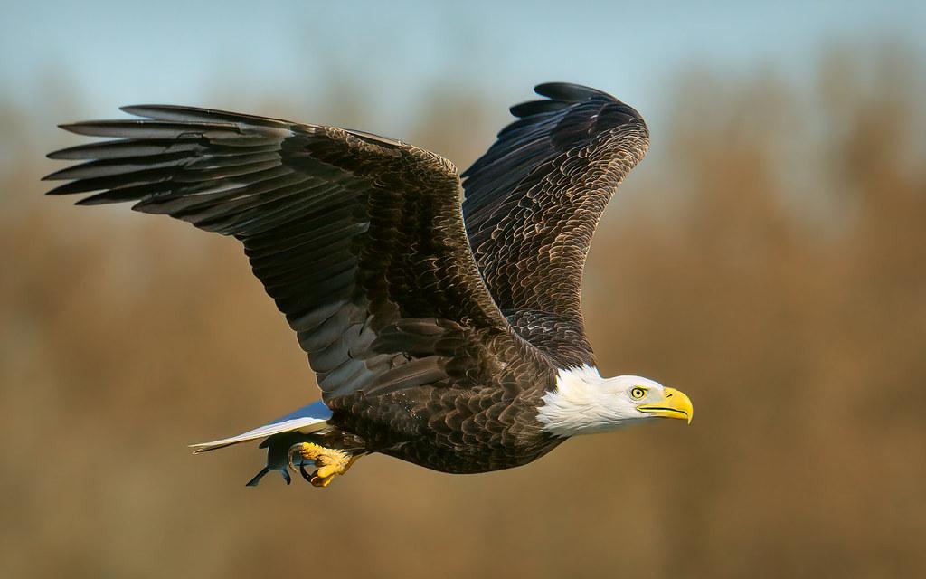 Eagles images