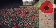 The Little Branch - Red Poppies{Field}- The Outlet