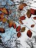 Orange Leaf Sky