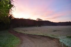 Sunrise by the weir