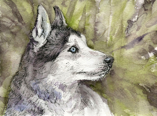 Siberian Husky-Postcards for the Lunch Bag