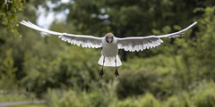Photo of #44 Free As A Bird (120 Pictures In 2020)