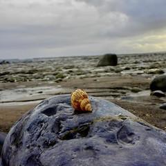 Photo of Sea Shell