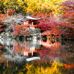 Daigo-ji temple in Kyoto during momiji (maple red leaves saison in Japan) thumbnail