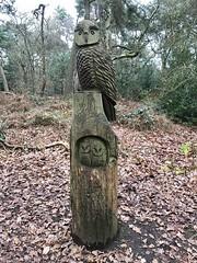 Photo of Ruff Wood