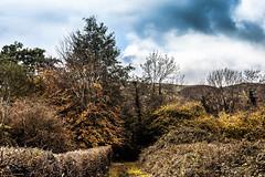 Photo of Autumn in Malvern