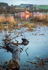 Photo of Log,Castle Semple Loch, Lochwinnoch,Renfrewshire,Scotland,UK
