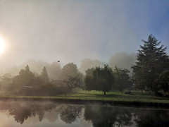 Le canal dans la brume