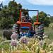 Garlic Harvesting, Queensland.