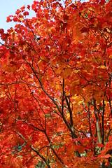 Photo of Autumn colour_(IMG_0501)