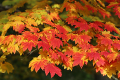 Photo of Autumn colour_(IMG_0503a)