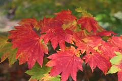 Photo of Autumn colour_(IMG_0505a)