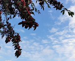 Photo of Berries and Clouds