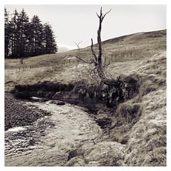 Photo of Duchal Moor 2020-11-25-02827