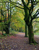 Roddlesworth Woods