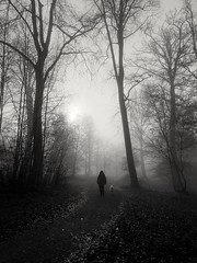 Photo of Walking in the mist