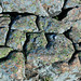 Lichens encrusting Cadillac Mountain Granite (Cadillac Mountain, Acadia National Park, Maine, USA) 9