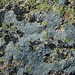 Lichens encrusting Cadillac Mountain Granite (Cadillac Mountain, Acadia National Park, Maine, USA) 2