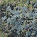 Lichens encrusting Cadillac Mountain Granite (Cadillac Mountain, Acadia National Park, Maine, USA) 1