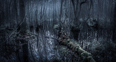 Photo of The swamp thing