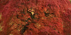 Photo of Acer In Full Colour