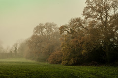Photo of Autumn mist
