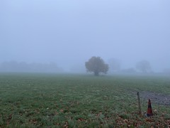 Photo of Hayes Street Farm fog