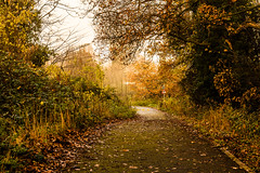 Photo of Autumn walk
