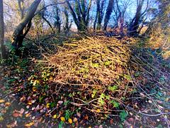 Photo of twigs of light1