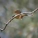 Sacred Kingfisher: Goodbye