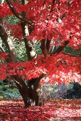 Photo of Autumn colour_(IMG_0549)