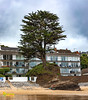 What a place for a tree! - Saundersfoot Beach, Saundersfoot, West Wales. UK. Europe.