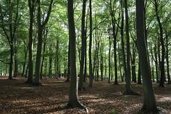 Photo of Woodland_Windsor Great Park_IMG_0552