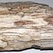 Fossil wood (Sixmile Creek Formation, Upper Miocene, 6 Ma; near Dillon, Montana, USA) 2