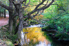 Photo of Tollymore Forest Park, Bryansford, Newcastle, Northern Ireland