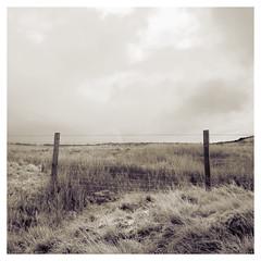 Photo of Duchal Moor 2020-11-25-02840