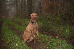 Photo of Woodland hound