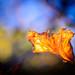 Leaf Flame