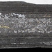 Pyrite streak in black shale (Ohio Shale, Upper Devonian; Lazarus Run, Delaware County, Ohio, USA) 1