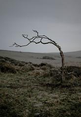 Photo of Lone Tree