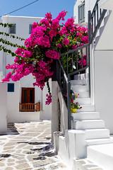 Flowers in the streets of Mykonos, Greece