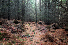 Photo of Forest Floor, Skiff Wood, Howwood, Renfrewshire, Renfrewshire, Scotland, UK