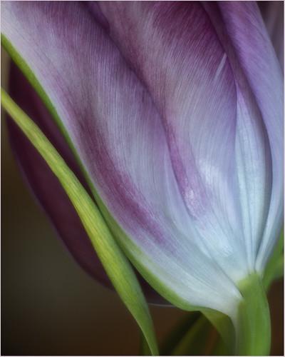 Lines and Petals by Sue Gajda - HM Class M DPI-Nov 2020